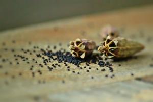 poppy-capsules-832776_1920
